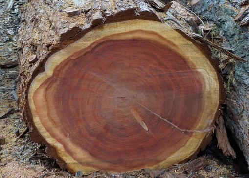 Das Beste Holz Zum Schnitzen Mit Der Motorsäge